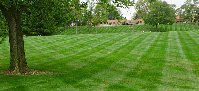 Services Commercial Mowing