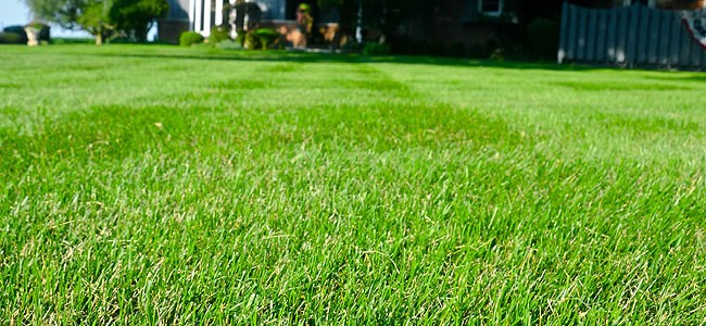 Cutting the dead tops off your grass helps it green up faster, and more uniformly.