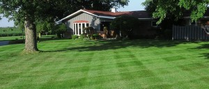 Cutting the dead tops of your grass helps it to green up quicker, and more uniformly.