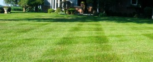 Healthy color at Memorial Day means your lawn has properly responded to good practices alike aeration and fall feeding.