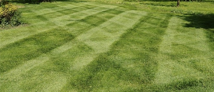 Lawn_feature0505